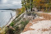 picture of polonia  - Autumnal trees on Kepa Redlowska cliff - JPG