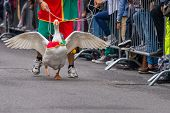 picture of all seeing eye  - Every year in Lacchiarella is the festival of the goose where thousands of people from all over Italy come to see the race of geese - JPG
