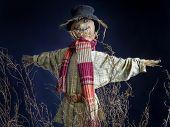 stock photo of scarecrow  - Scarecrow on dark blue background - JPG