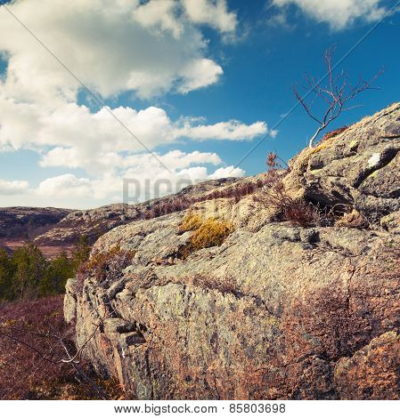 Norwegian Spring Landscape With Small Bare Tree