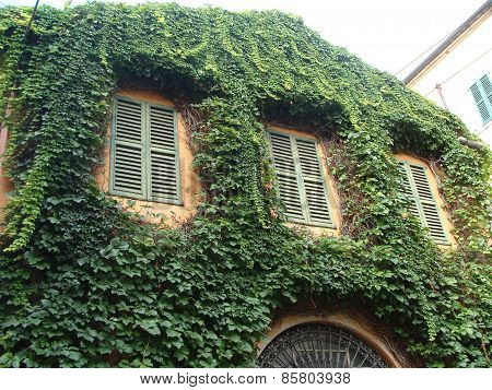 Old House Entwined With Climbing Plants