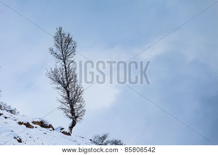 Lonely tree on the mountain slope