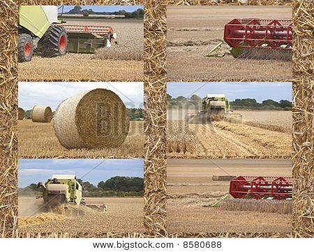 Harvest Time On The Farm