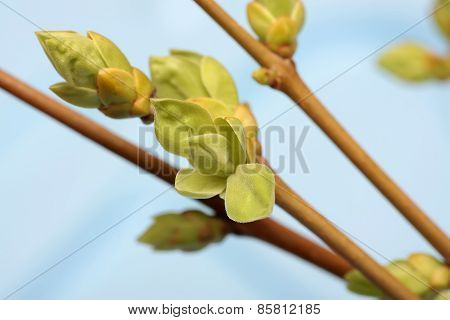 Spring branch of Tree. Tree stick against blue sky background.
