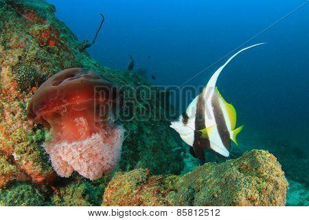 Bannerfish and Jellyfish