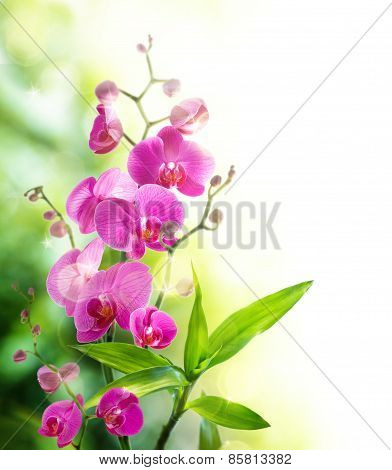 beautyful orchid and bamboo for border spa