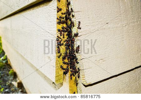 Ant Nest Infestation