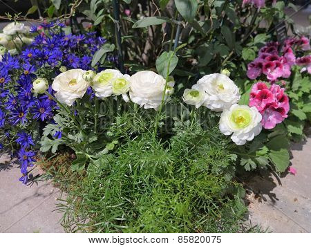 Flowers of Spring and landscaping ideas for gardens