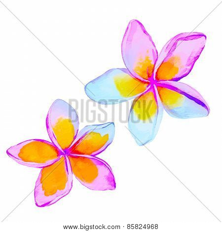 Plumeria / Frangipani Flowers In Watercolor