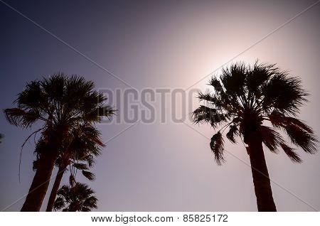 Tropical Canarian Green Palm Leaf Background