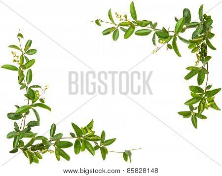 Vine Leaves With Small Flower Frame Isolated