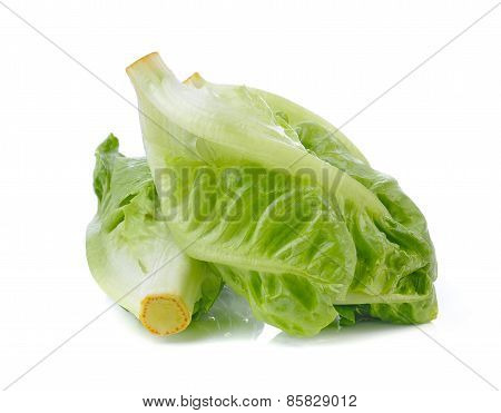Fresh Lettuce (baby Cos) On White Background