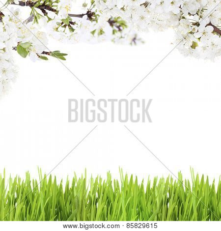 Beautiful spring background with blooming twigs and green grass