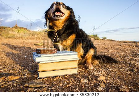 One intelligent Black Dog Reading a Book