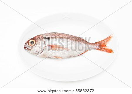Pezzogna Fish, Variety Of Seabream, White Background