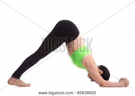 Dolphin Yoga Asana