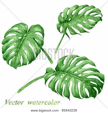 Tropical Plants  Leaves Set