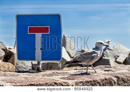 Sea Gull And Traffic Sign