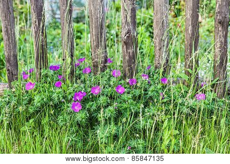 Blooming Flowers On A Wooden Fence