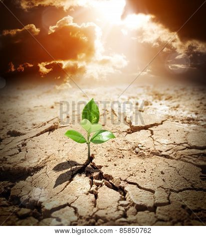 plant in arid land - climate warming and drought concept