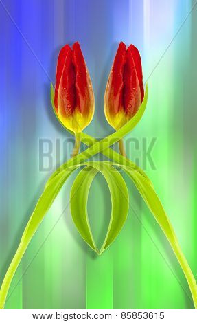 Red twin tulips