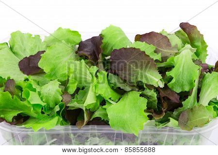 Mix salad in box.