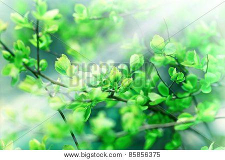 Spring leaves lit by sunbeams