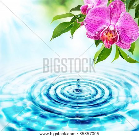 freshness concept - drops in water and pink orchids