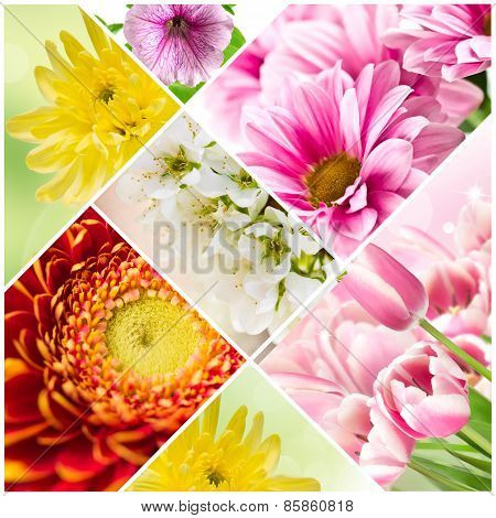 Collage Of Blooming Flowers