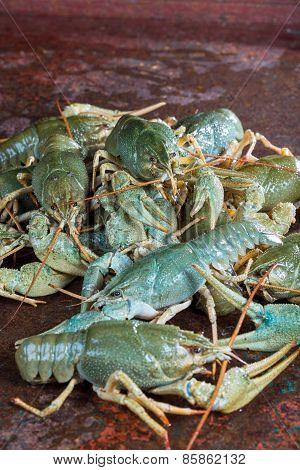 Heap Live Crayfish