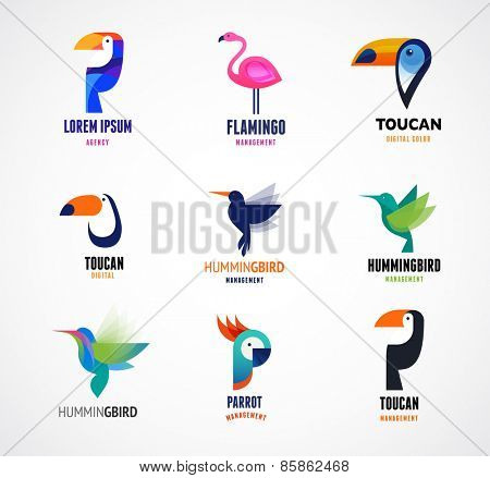 Tropical birds - toucan, flamingo, parrot and hummingbird