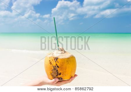 Tropical Coconut On Palm Against A Background Of Turquoise Sea At Caribbean Beach
