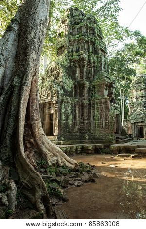 The ruins of Ta Prom Temple, Cambodia