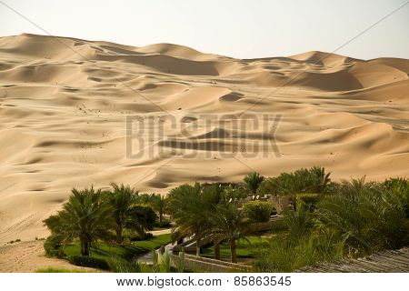 Green oasis in the middle of a sand desert