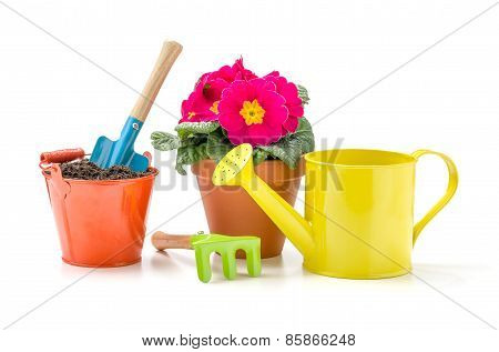 Colorful Garden Tools And A Primrose On A White Background