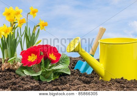 Daffodils And Primroses With A Watering Can And A Shovel