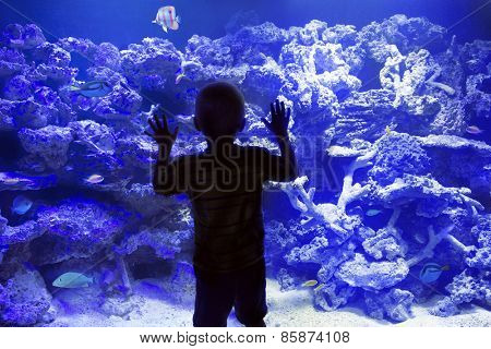 Child watching reef fish in a large Aquarium