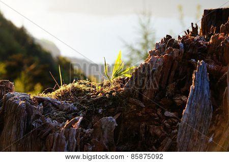 Plant on a Stump