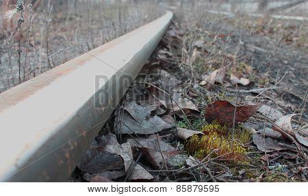 Moss And Rail