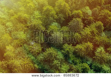 Healthy Green Forest In Sunlight