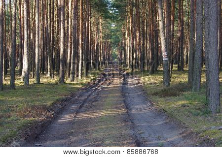 Forest road.