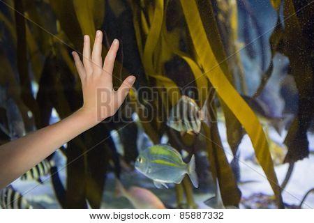 Hand pressed against glass of tank at the aquarium