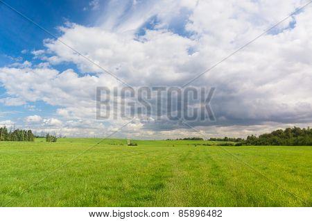 Vibrant Nature Field Landscape