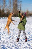 image of american staffordshire terrier  - Young woman playing with dog breed American Pit Bull Terrier in winter - JPG