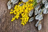 foto of mimosa  - French fresh mimosa with catkins on wooden table - JPG