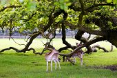 picture of bambi  - Two deers in beautiful forest background with natural light - JPG