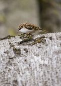 picture of creeper  - Tree Creeper spotted outdoors in National Botanic Gardens Dublin Ireland - JPG