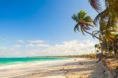 picture of atlantic ocean beach  - Palm trees on a sandy beach - JPG