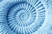 stock photo of prehistoric animal  - Abstract blue made from Ammonite prehistoric fossil on the surface - JPG
