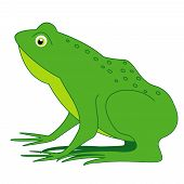 image of cute frog  - Cute frog clip art isolated on white background - JPG